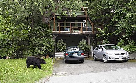Bear outside house