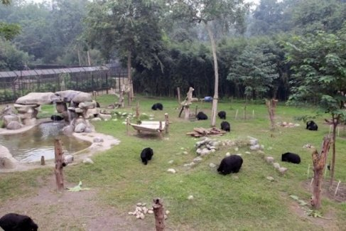 Animal Asia's China Bear Rescue Centre, Chengdu