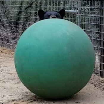 Forest Animal Rescue - Boomer ball