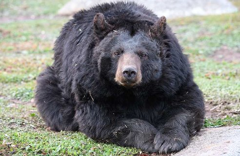 Photo of bear, courtesy of Lions, Tigers and Bears