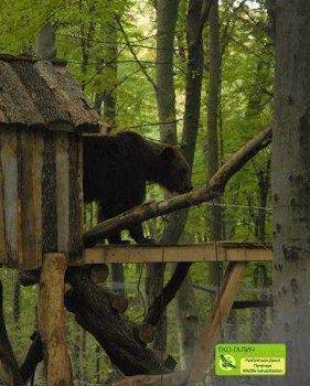 Myr investigating the treehouse at Eco-Halych. Photo courtesy of Eco-Halych.