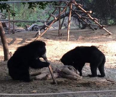 Sloth bear workshop