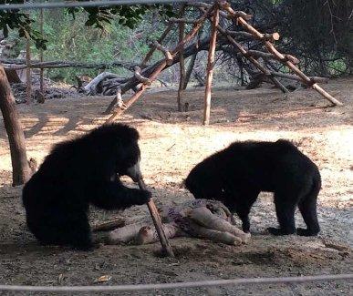 Sloth bear workshop